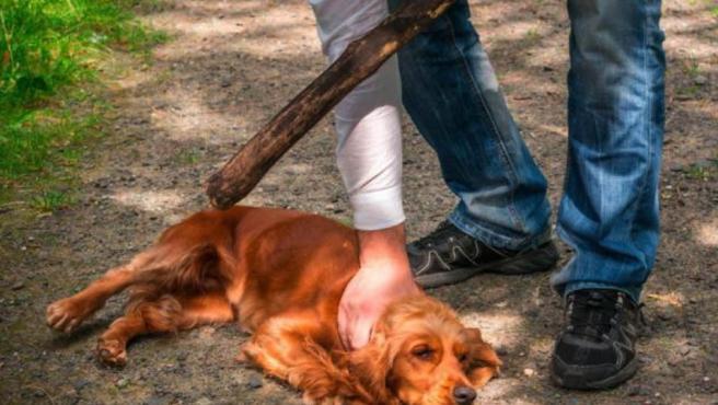 Imagen de un perro maltratado por su dueño