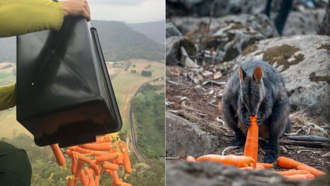 Australia está lanzando alimentos por el aire a los animales salvajes a causa de los incendios.