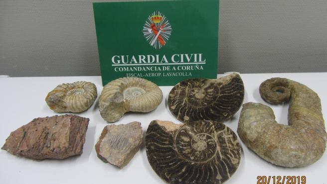 Fósiles incautados por la Guardia Civil en el aeropuerto de Santiago
