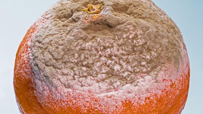Ante la presencia de moho, sobre todo en alimentos blandos, como las frutas, lo más seguro es tirar el producto.