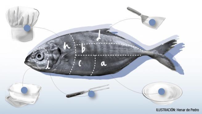 Radiografía del pescado.