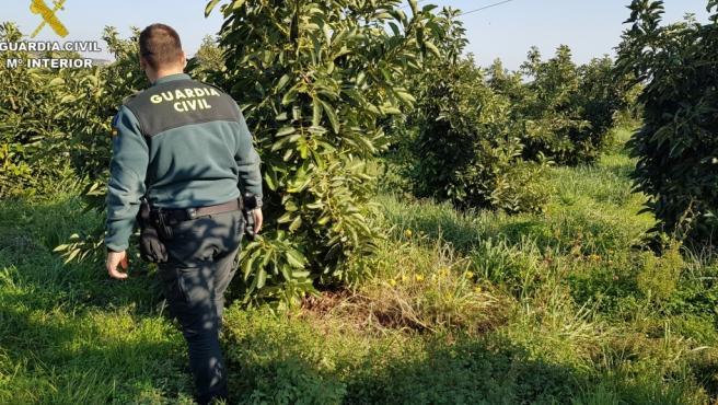 Sucesos.- Investigan a una mujer por robar 3.000 kilos de aguacates y venderlos a 1,5 euros el kilo