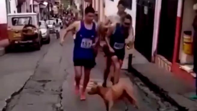 Un vídeo en el que el atleta colombiano Jaime Alejandro patea a un perro, que se le cruzó en una carrera, ha levantado polémica en las redes sociales e incluso los patrocinadores han cortado su relación con él.