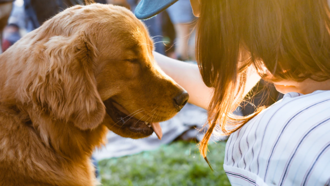 Un perro y su dueño acariciándolo