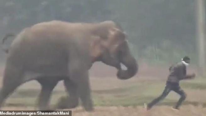 El elefante corriendo detrás del turista que quería hacerse un selfie.