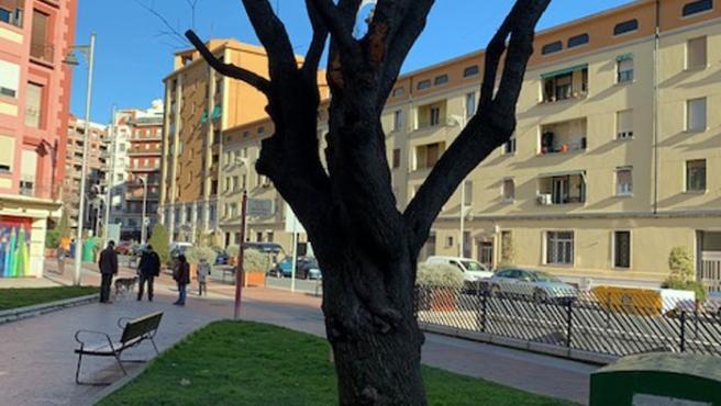 """Ecologistas en Acción muestra """"sus dudas"""" de que Logroño esté avanzando """"realmente"""" para ser Capital Verde Europea"""