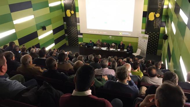 Reunión del Consejo Sectorial de Aceite de Oliva de Cooperativas Agro-alimentarias de Andalucía