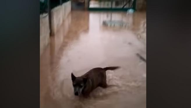 Fotograma del vídeo con el que la protectora muestra el estado del refugio tras el temporal