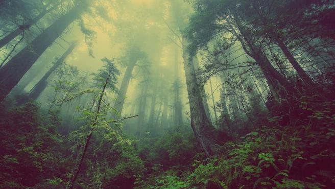 Hay más árboles en el planeta que estrellas en la Vía Láctea. Un hecho que es muy sorprendente y que quizás muchas personas no conocían.