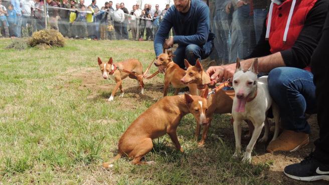 Caza, cazadores, perros de caza