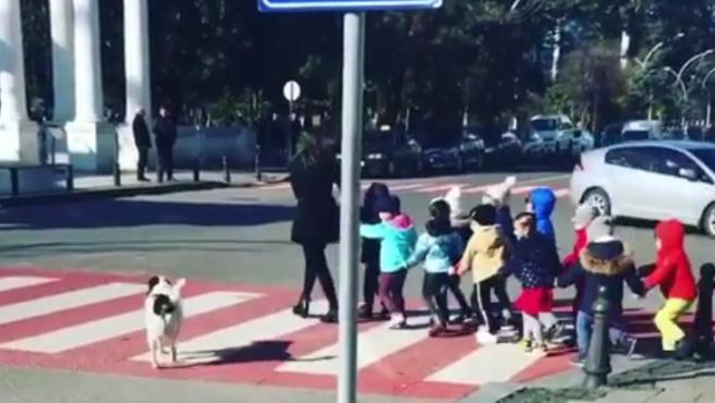 Kupata, el famoso perro callejero que regula el tráfico.