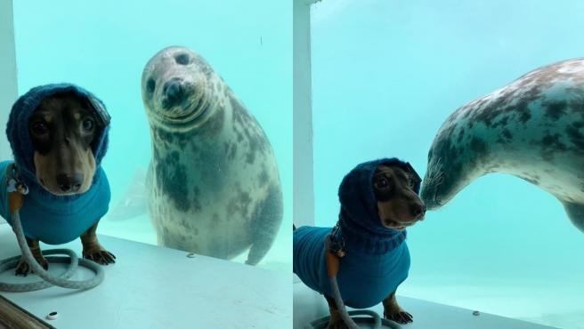 Aayla y Stanley, la foca y el perro salchicha.