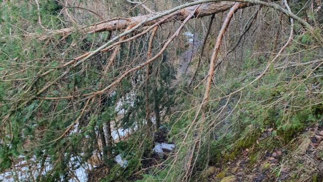 Daños del temporal 'Gloria' en el Parc Natural de l'Alt Pirineu
