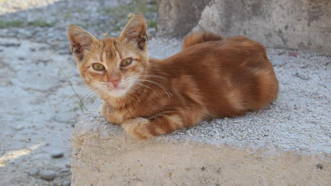 Imagen de archivo de un gato callejero.