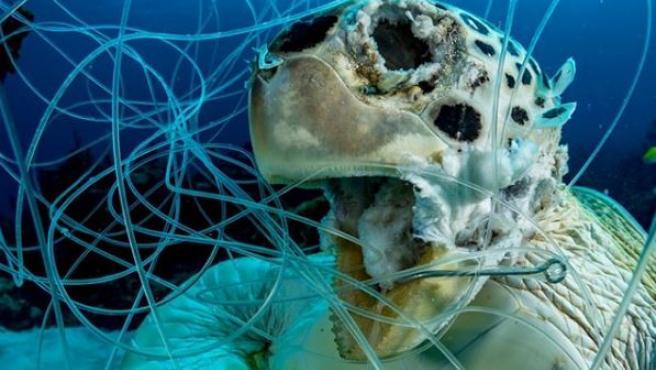 Imagen premiada de una tortuga muerta.