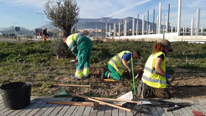 Trabajos de mantenimiento en las zonas ajardinadas del centro comercial Jaén Plaza