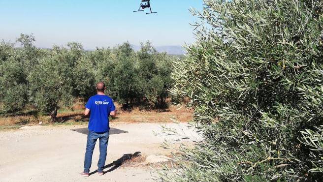 Uso de drones en la olivicultura