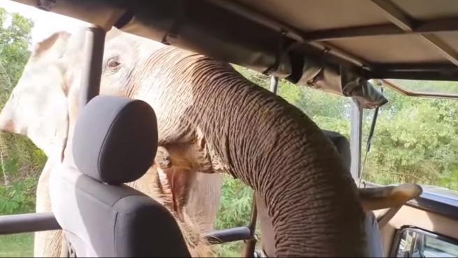 Momento en que el elefante roba comida a unos turistas