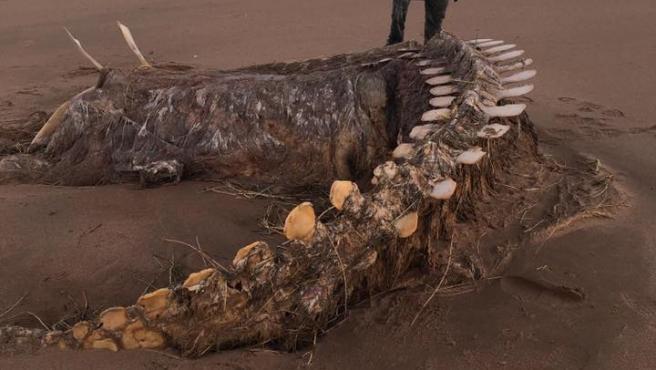 El extraño esqueleto apareció en una playa cerca de Aberdeen (Escocia).