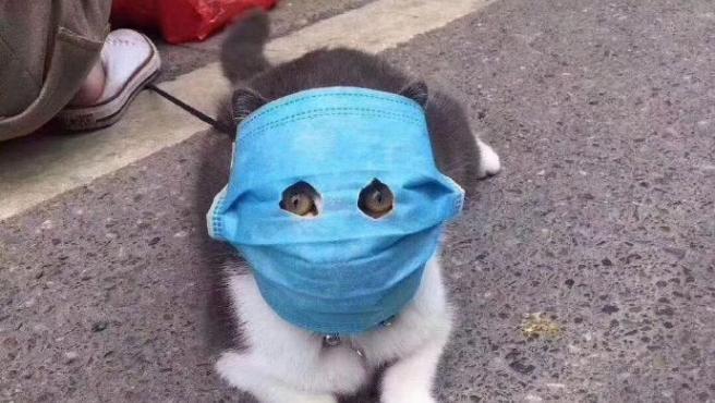 Gato con mascarilla debido al coronavirus.
