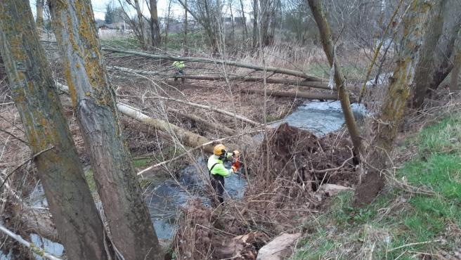Trabajos de limpieza del río Ciruelos a su paso por Salas (Burgos).