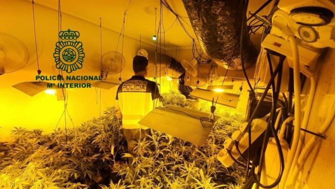 Imagen del laboratorio de marihuana.