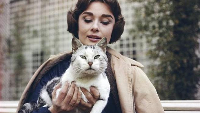 Audrey Hepburn con un gato