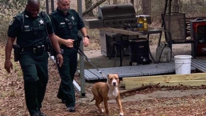 Un pit bull protege a un niño perdido en el bosque en Florida