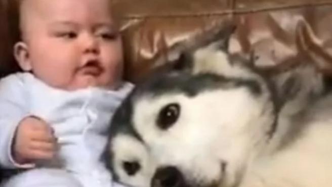 La historia de un bebé y un perro en TikTok.