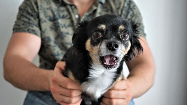La cinofobia suele aparecer en la infancia y se generaliza a cualquier tipo de perro.