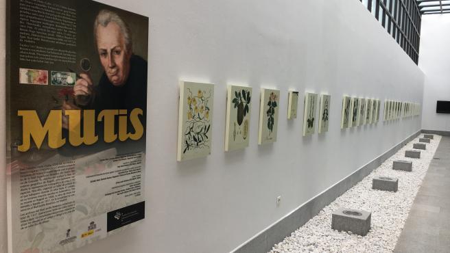 Ekoetxea Urdabai presenta una exposición con las ilustraciones botánicas de José Celestino Mutis