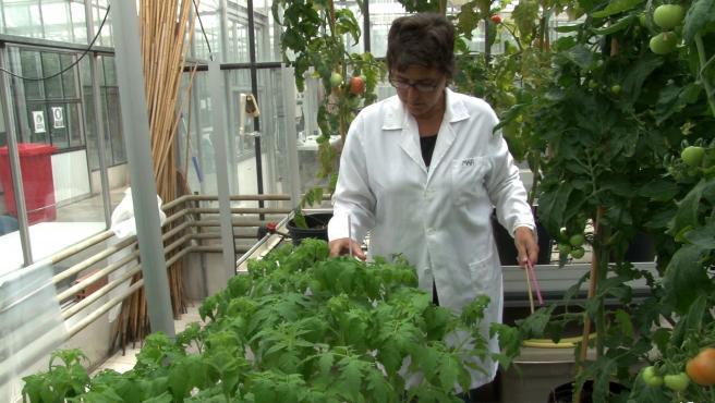 La UPV, millor universitat espanyola en Agricultura i Ciències Forestals, segons QS World University Rànquings