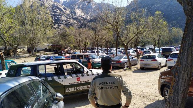 Agentes Forestales frente a numerosos vehículos aparcados este sábado en La Pedriza (Madrid).
