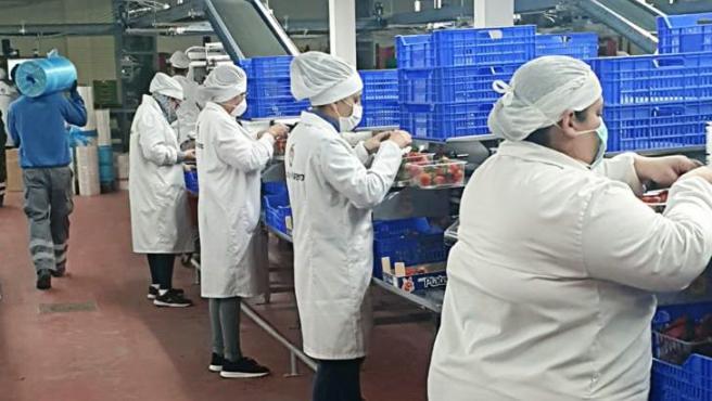 Una cooperativa de fresa en Huelva.
