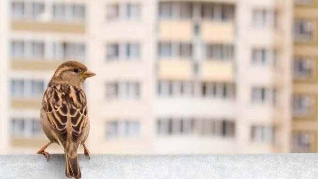 Desde SEO/BirdLife aseguran que no suele ser necesario el aporte adicional de alimento proporcionado por las personas a las aves urbanas.