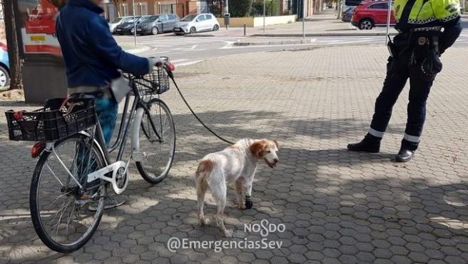 Mujer denunciada en Sevilla por circular en bicicleta con su perro lesionado atado al manillar incumpliendo el decreto de estado de alarma Mujer denunciada en Sevilla por circular en bicicleta con su perro lesionado atado al manillar incumpliendo el decreto de estado de alarma 27/3/2020