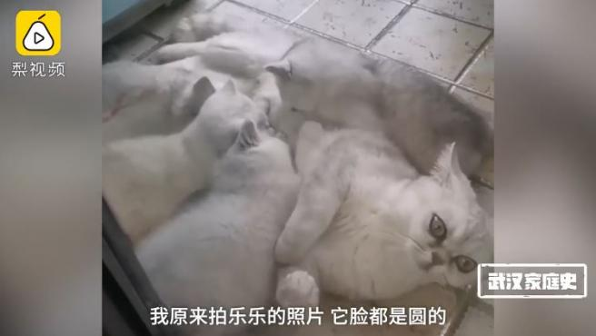 Le Le, la gata de Wuhan que sobrevivió sola en plena epidemia de coronavirus.