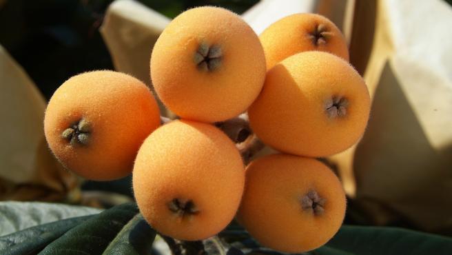 Los nísperos son una fruta típica de primavera, pues solo podemos disfrutar de ellos en esta época del año.