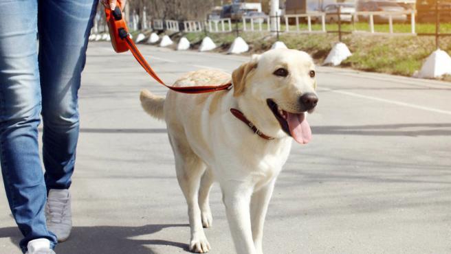 Imagen de una perro de paseo.