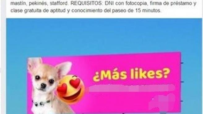 Denunciado un hombre por alquilar a sus perros en A Coruña para sacarlos a pasear durante el estado de alarma.