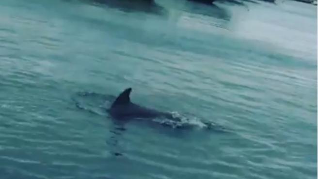Delfines en el Puerto de Premià de Mar.