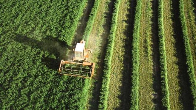 Campo de cultivo, agricultura, cosecha