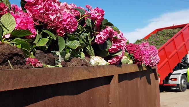 Plantas y flores en el vertedero de Ejido Medio Ambiente, en El Ejido (Almería)