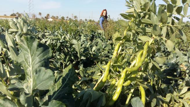 Cultivo de brócoli y habas