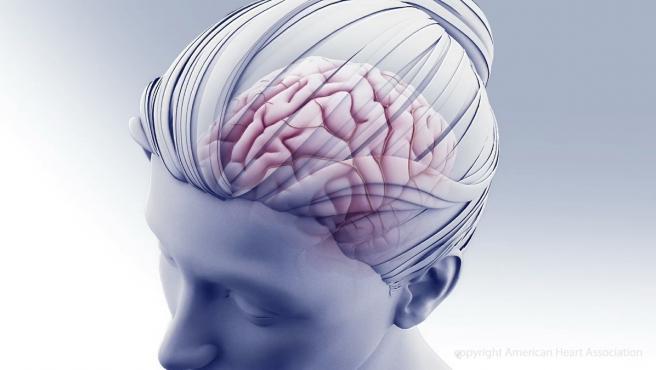 Ilustración del cerebro