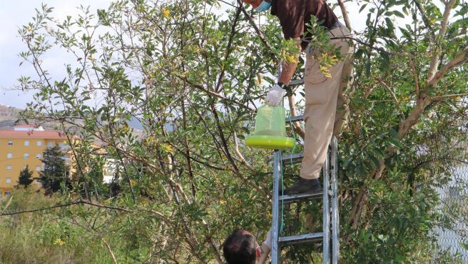 Instalación de comederos tolva en el municipio de Torrox, que adelanta la campaña contra el mosquito tigre