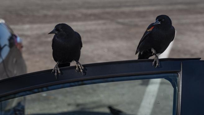 Los excrementos de los pájaros son altamente corrosivos.