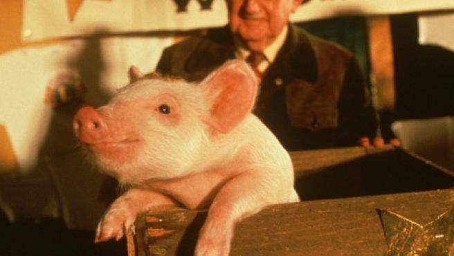 Fotograma de la película de 1995 'Babe, el cerdito valiente'.