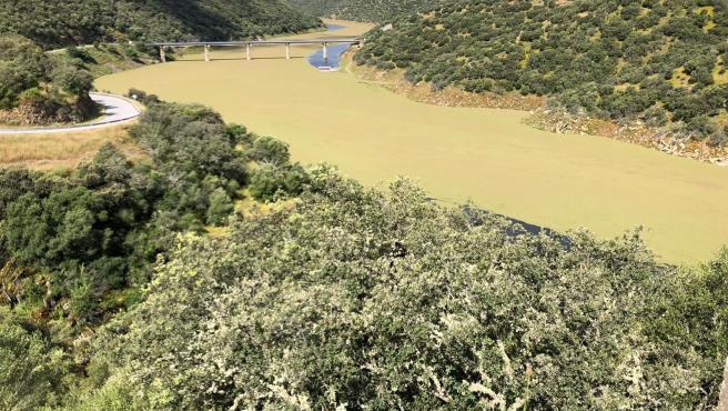 Invasión del helecho de agua en el Tajo a su paso por Monfragüe