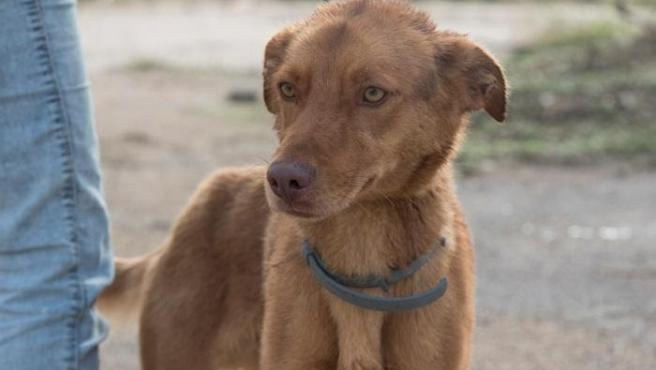 Perro del Centro de Recogida de Animales de la DPH